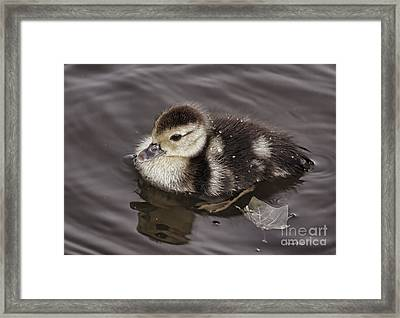 All By Myself Framed Print by Deborah Benoit