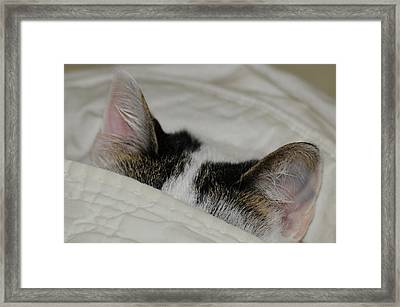 All Ears Framed Print