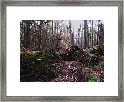 All Fall Down Framed Print by Anna Villarreal Garbis