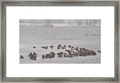 Framed Print featuring the photograph All Flights Delayed Due To Inclement Weather... by Kevin Munro