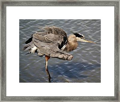 All Fluffed Up Framed Print by Paulette Thomas