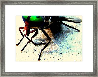 All Gods Creatures Resting Wings Framed Print by Shannons Photos