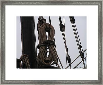 All Tied Up Framed Print by Deborah Hughes