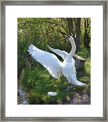 All Together Now Framed Print by Doug Thwaites