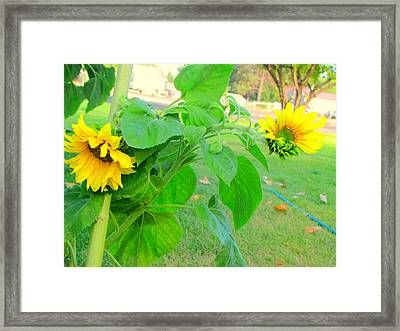 All Twisted Up Framed Print by Amy Bradley