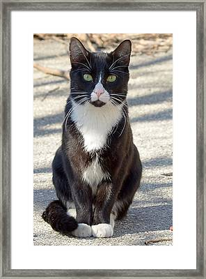 Alley Cat Framed Print by Lisa Phillips