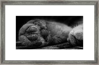 Alley Kat Nap Framed Print