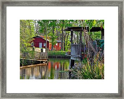 Alligator Bayou Framed Print