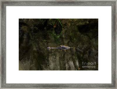 Framed Print featuring the photograph Alligator In Swamp by Dan Friend