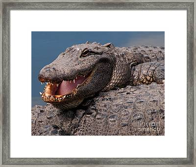 Framed Print featuring the photograph Alligator Smile by Art Whitton