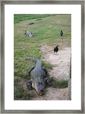 Alligator Train Framed Print