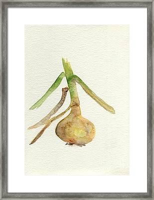 Framed Print featuring the painting Allium Cepa  by Annemeet Hasidi- van der Leij