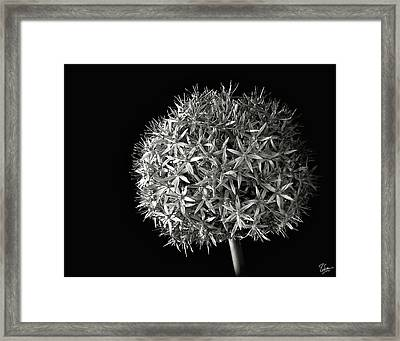 Allium In Black And White Framed Print by Endre Balogh