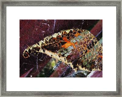 Almost Gone Framed Print by Todd Sherlock