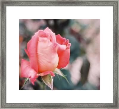 Framed Print featuring the photograph Almost Ready by Lynnette Johns