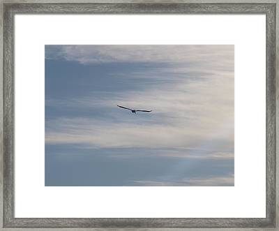 Almost Stealthily Framed Print by E Luiza Picciano
