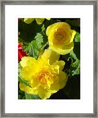 Framed Print featuring the photograph Almost There by Frank Wickham