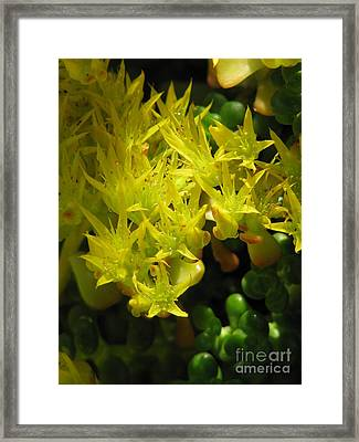 Almost Undersea Framed Print by Rory Sagner