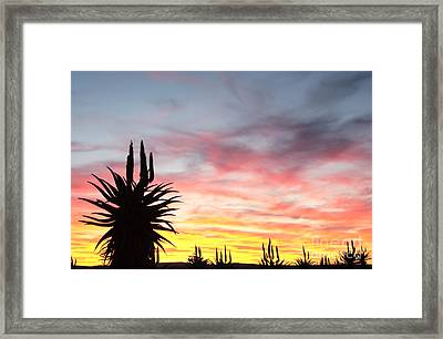 Aloe Ferox  South Africa Framed Print by Neil Overy