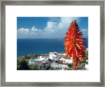 Aloe Flower Framed Print