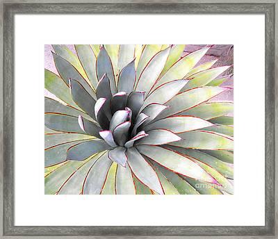 Aloe Framed Print by Rebecca Margraf