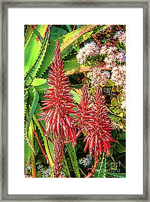 Aloe Vera Barbadensis Flower In Bloom Framed Print by Mariola Bitner