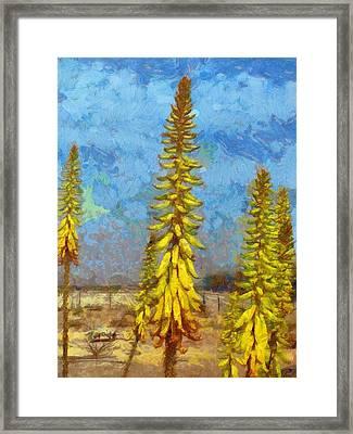 Aloe Vera Flowers Framed Print