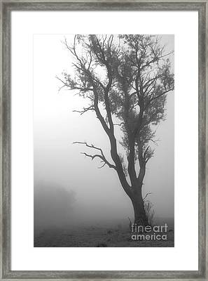 Alone But Not Forgotten Framed Print