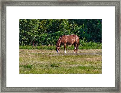 Alone In The Pasture Framed Print by Doug Long