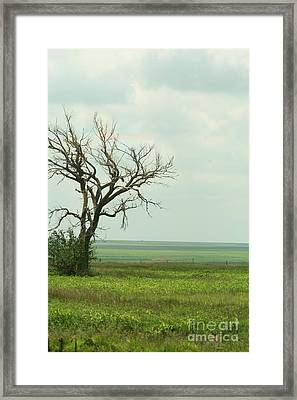 alone on the Prairie Framed Print