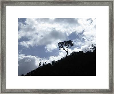 Alone Framed Print by Sandra Phryce-Jones