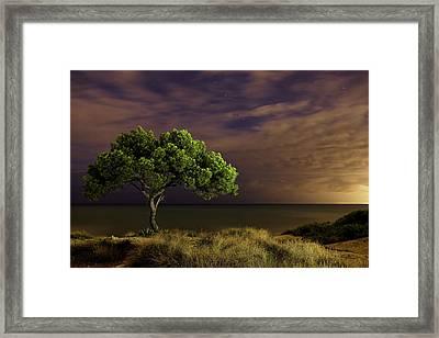 Alone Tree Framed Print by Alex Stoen Photography