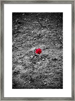 Alone Framed Print by Trevor Fellows