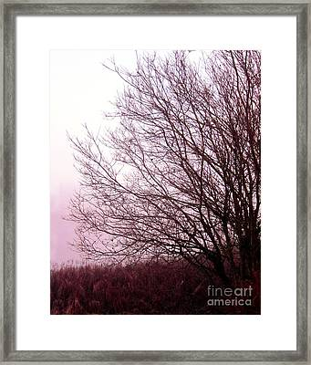 Along A Misty Bank Framed Print by Michelle Bergersen