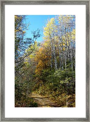 Framed Print featuring the photograph Along The Back Road by Vicki Pelham