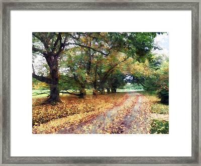 Along The Path Under The Trees Framed Print by Susan Savad