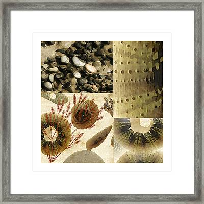 Along The Shore Framed Print by Bonnie Bruno
