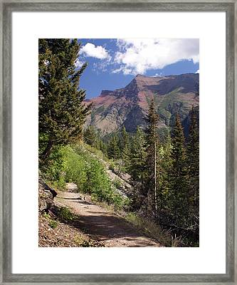 Along The Trail Framed Print by Marty Koch