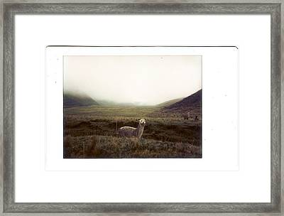 Alpaca Framed Print by photography by Pamela Abad