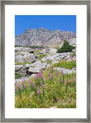 Framed Print featuring the photograph Alpine Abundance 3 by Katie LaSalle-Lowery