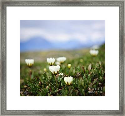 Alpine Meadow In Jasper National Park Framed Print by Elena Elisseeva