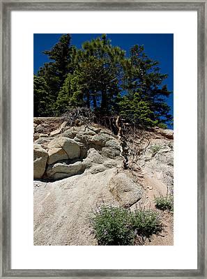Alpine Pine Hangs On For Life Framed Print