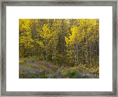 Alpine Surprise Framed Print