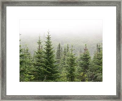 Framed Print featuring the photograph Alpine Trees by Robin Regan