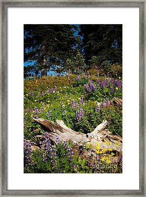 Framed Print featuring the photograph Alpine Wildflower Meadow by Karen Lee Ensley