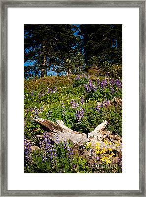 Alpine Wildflower Meadow Framed Print by Karen Lee Ensley