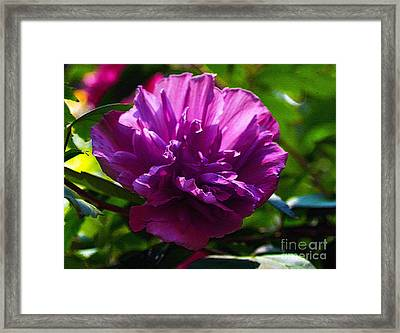 Althea II Framed Print by Patricia Griffin Brett