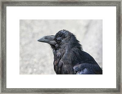 Am I Good Looking Or What Framed Print