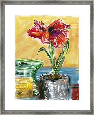 Amaryllis Framed Print by Russell Pierce