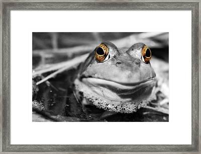 Amber Eyes Framed Print by Amy Schauland